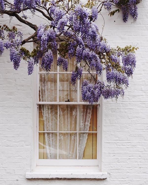 okno strom šeřík